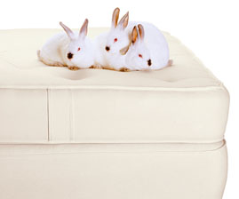 Kids Mattresses - Our full line - Natural, Healthy & LOCAL